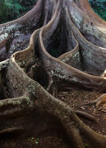 Kauai_Ancient_2